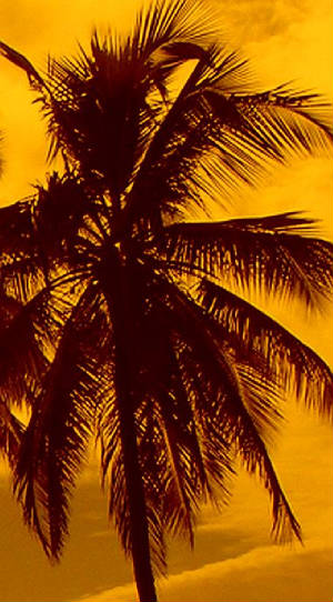 The golden light of the setting tropical sun...